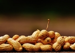 Evidence Suggests that Early Introduction of Peanuts Prevents Development of Peanut Allergy.